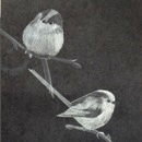 Catherine Smart - Long Tailed Tits